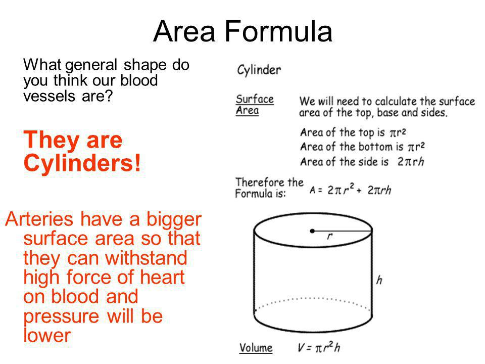 Area Formula What general shape do you think our blood vessels are They are Cylinders!