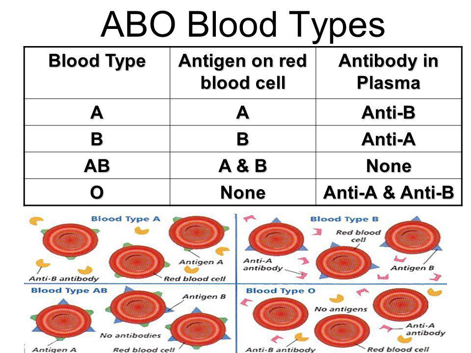 Antigen on red blood cell