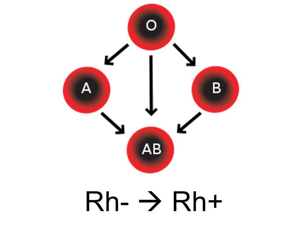 Rh-  Rh+