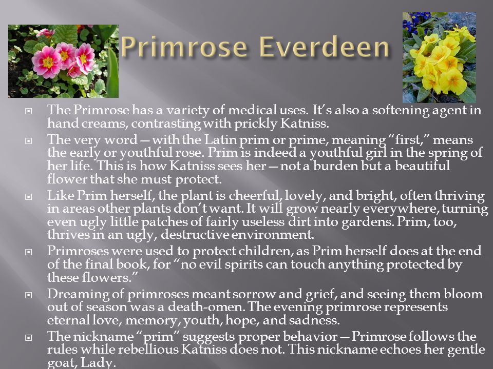 Primrose Everdeen The Primrose has a variety of medical uses. It's also a softening agent in hand creams, contrasting with prickly Katniss.