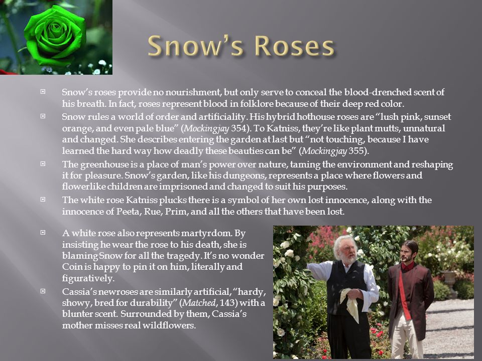 Snow's Roses