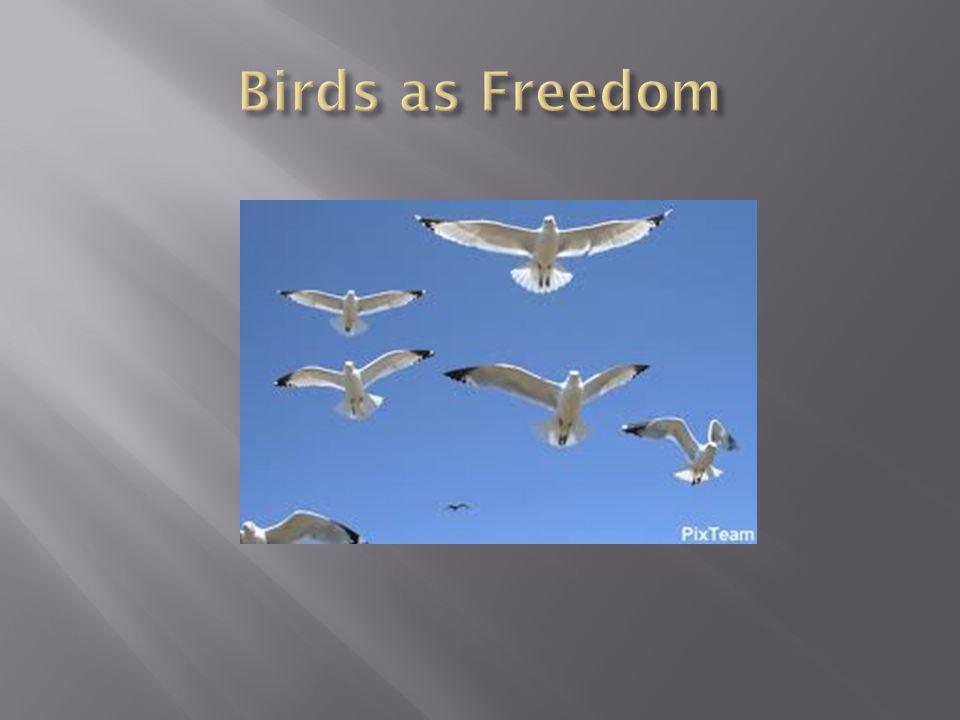 Birds as Freedom