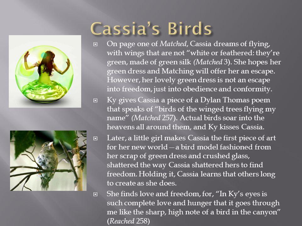 Cassia's Birds