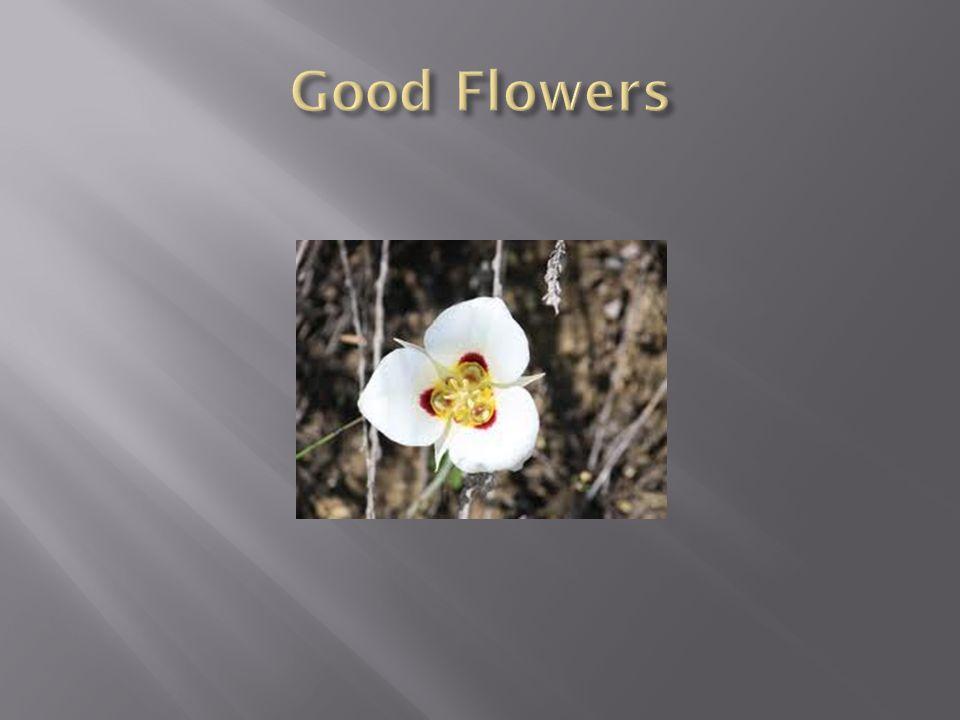 Good Flowers