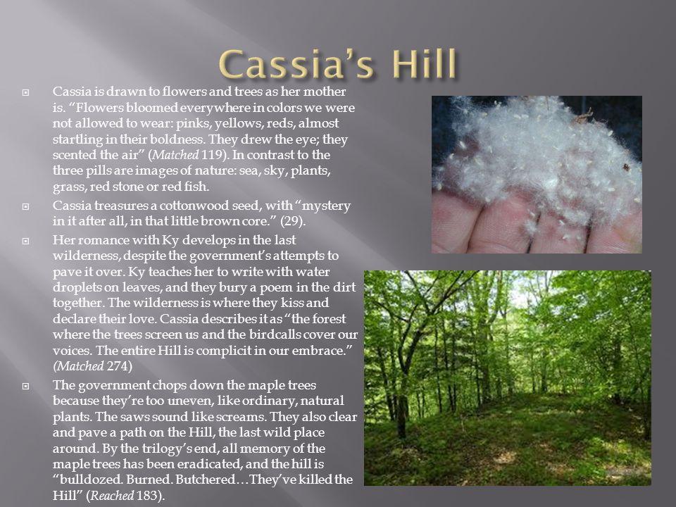 Cassia's Hill