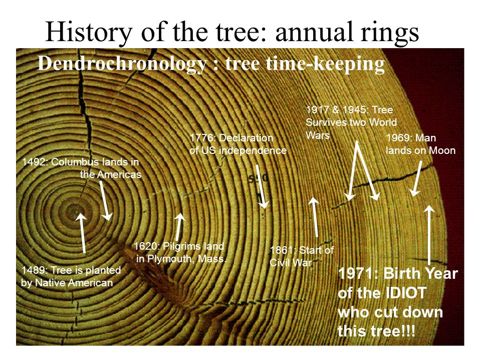 History of the tree: annual rings