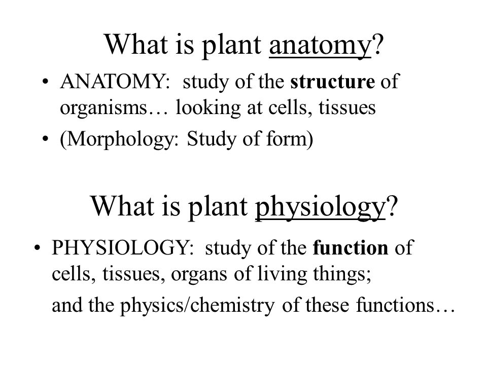 What is plant physiology