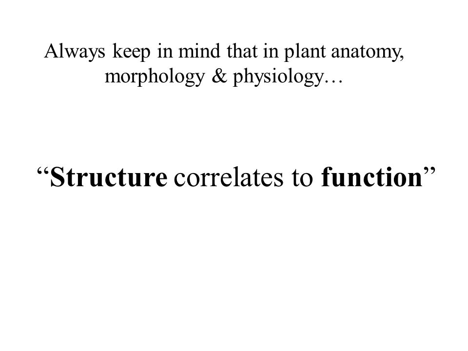 Structure correlates to function