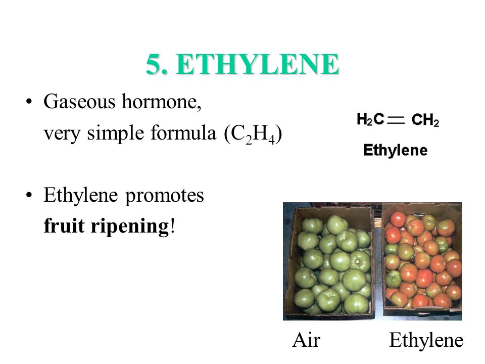 5. ETHYLENE Gaseous hormone, very simple formula (C2H4)
