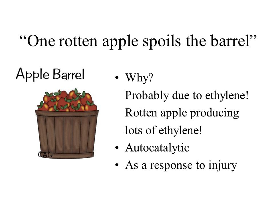 One rotten apple spoils the barrel