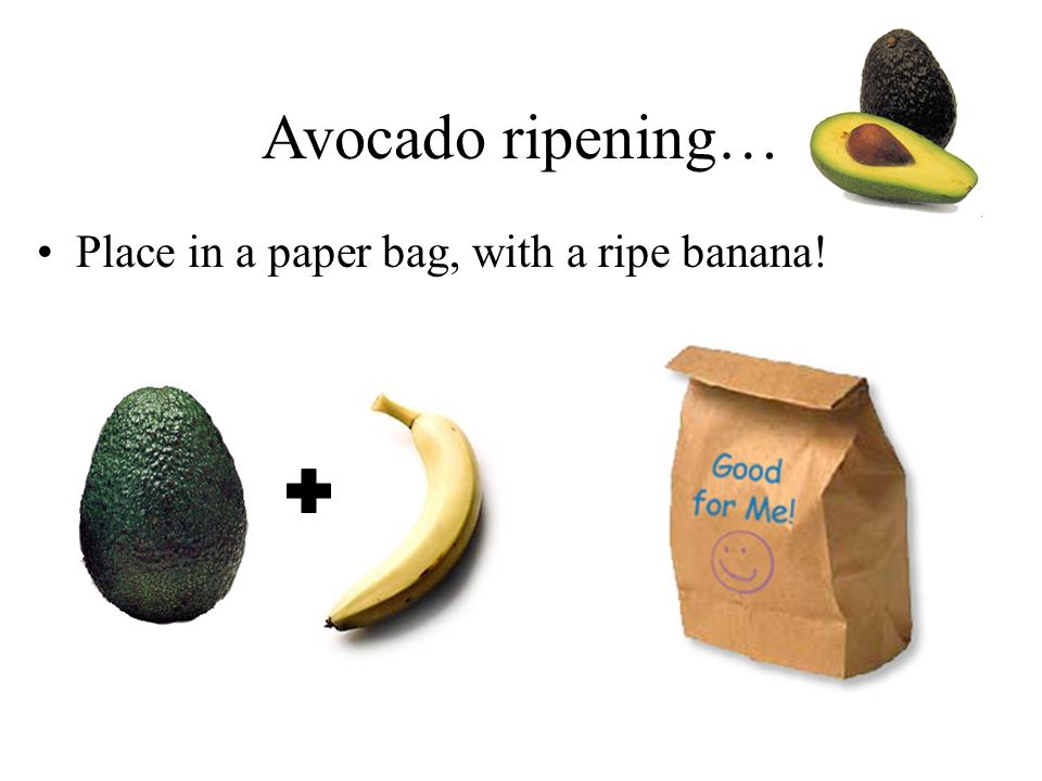 Avocado ripening… Place in a paper bag, with a ripe banana!