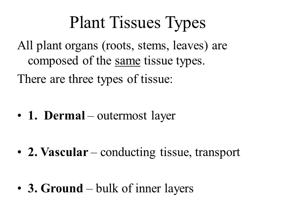 Plant Tissues Types All plant organs (roots, stems, leaves) are composed of the same tissue types. There are three types of tissue: