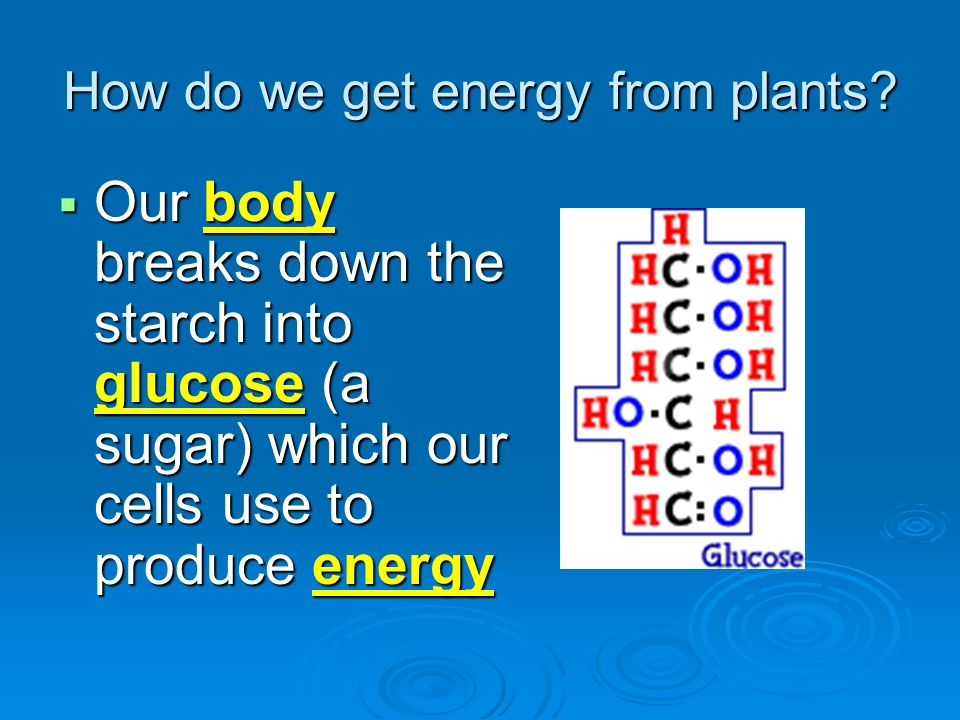 How do we get energy from plants