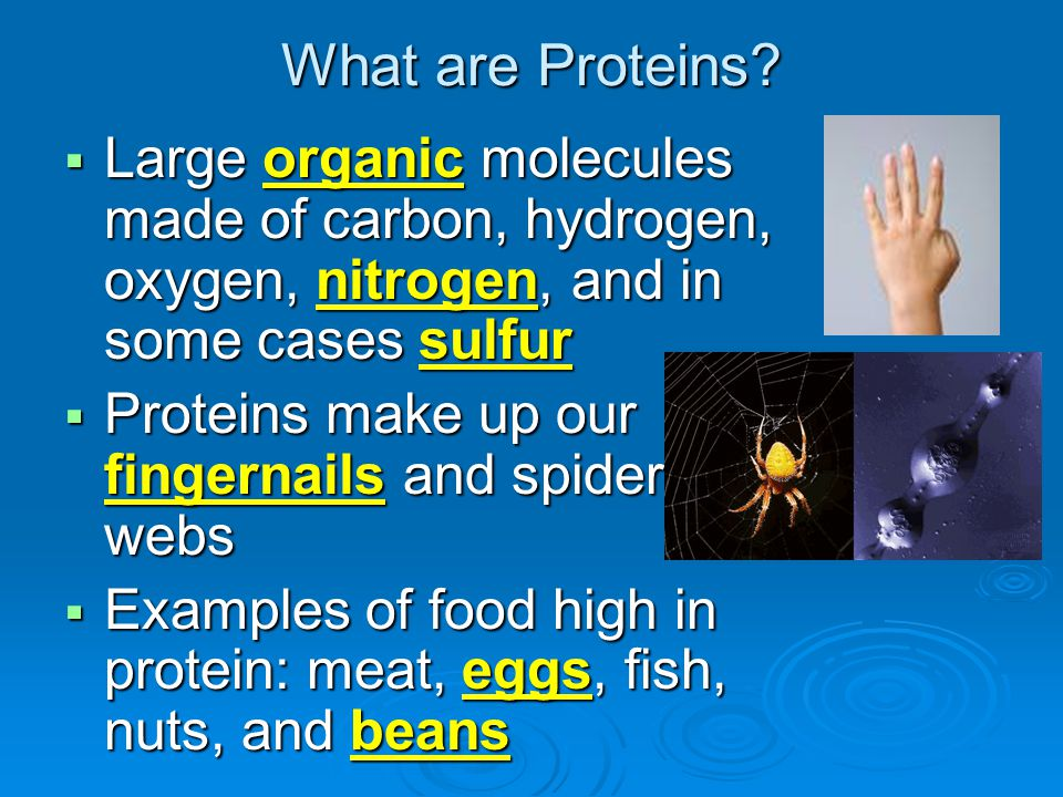 What are Proteins Large organic molecules made of carbon, hydrogen, oxygen, nitrogen, and in some cases sulfur.