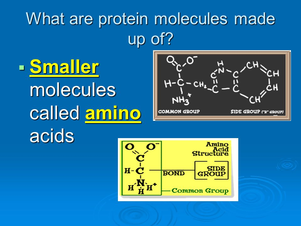 What are protein molecules made up of
