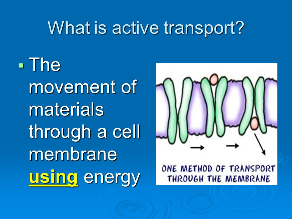What is active transport