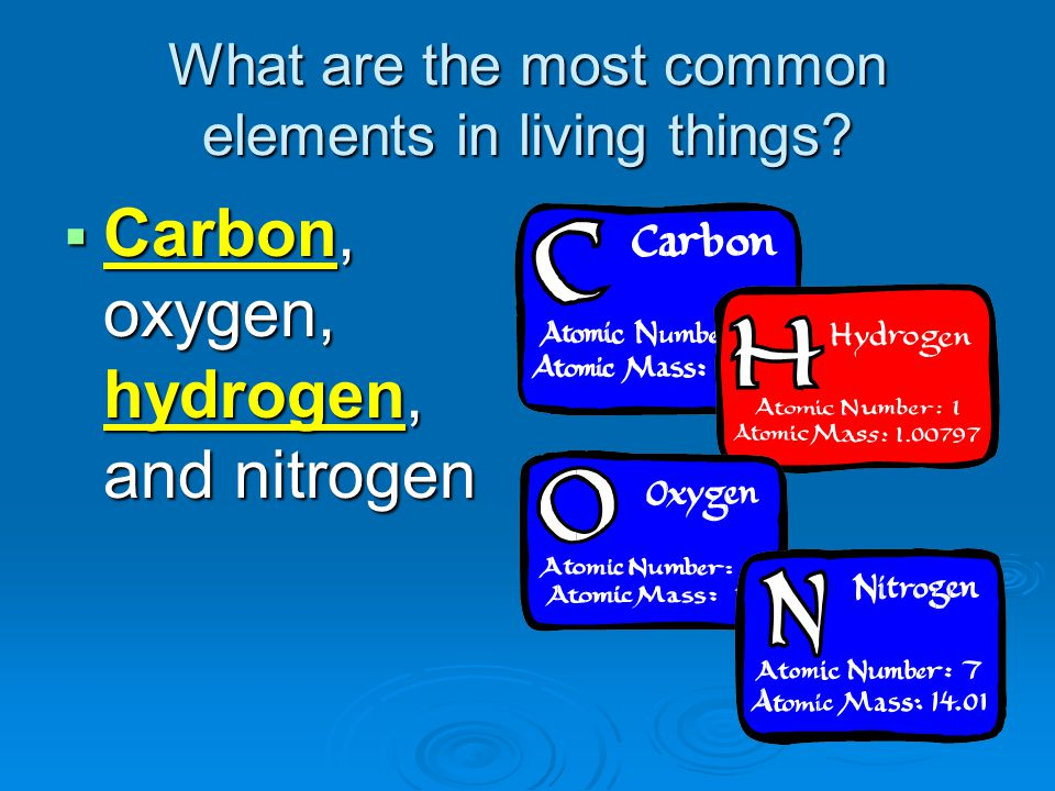 What are the most common elements in living things