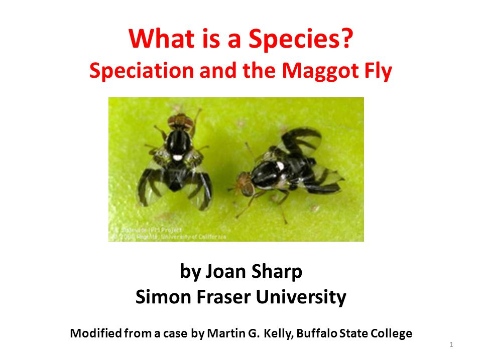 What Is A Species Speciation And The Maggot Fly By Joan Sharp Simon Fraser University Modified From A Case By Martin G Kelly Buffalo State College