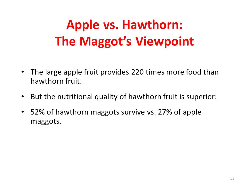 Apple vs. Hawthorn: The Maggot's Viewpoint