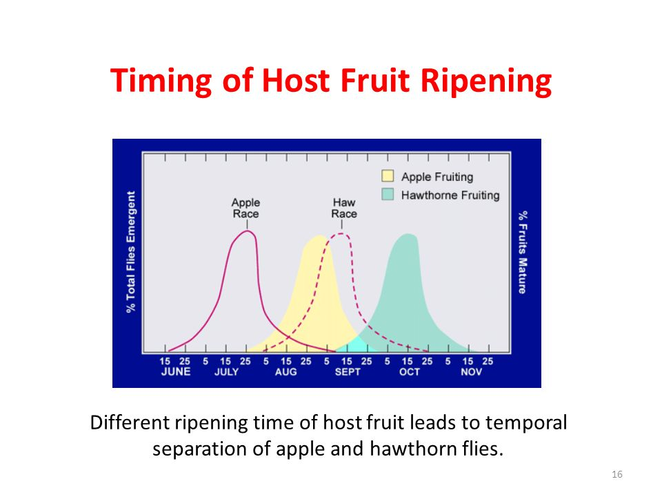 Timing of Host Fruit Ripening