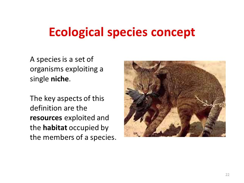 Ecological species concept