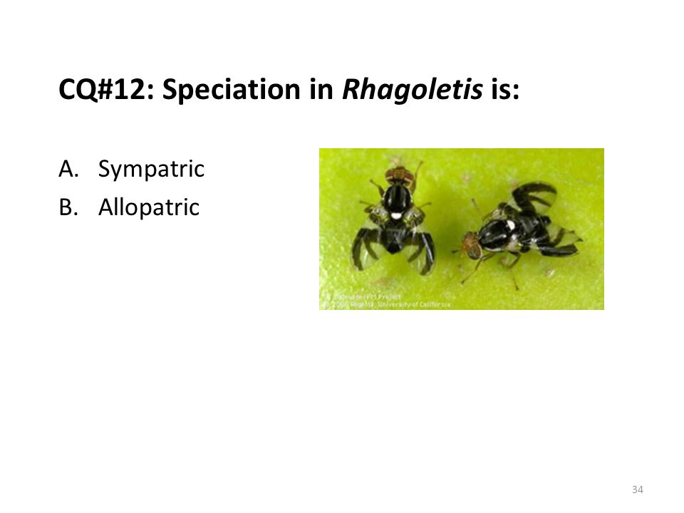 CQ#12: Speciation in Rhagoletis is: