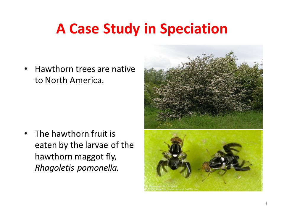 A Case Study in Speciation