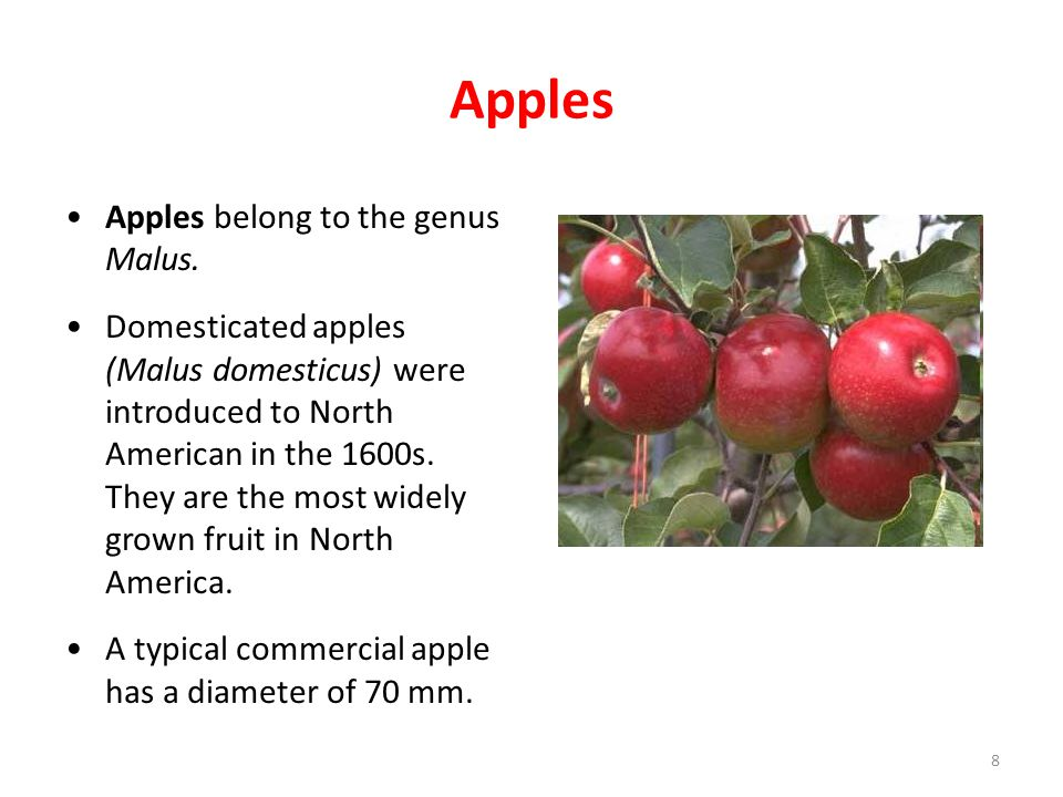 Apples Apples belong to the genus Malus.