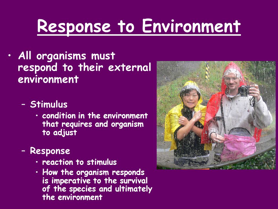 Response to Environment