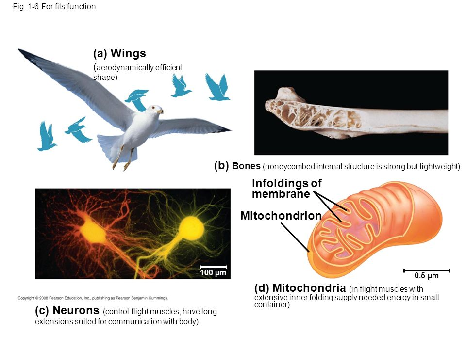 (a) Wings (aerodynamically efficient shape)