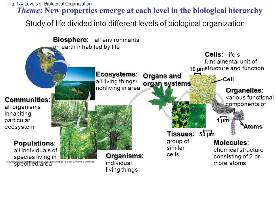 Study of life divided into different levels of biological organization