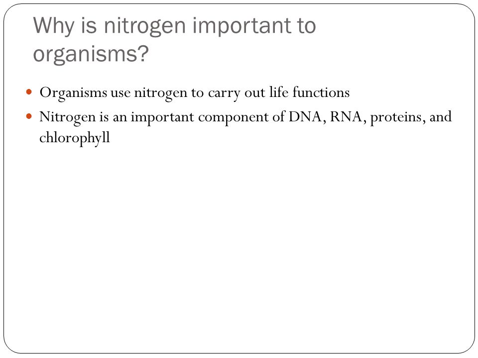 Why is nitrogen important to organisms