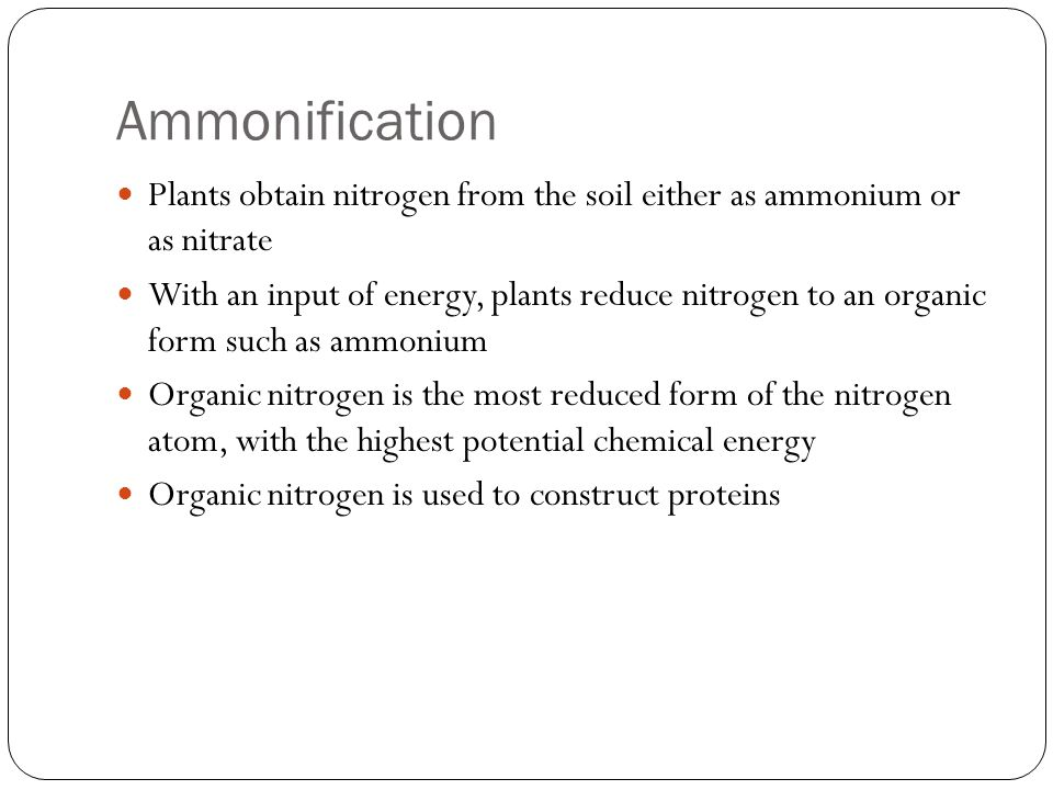 Ammonification Plants obtain nitrogen from the soil either as ammonium or as nitrate.