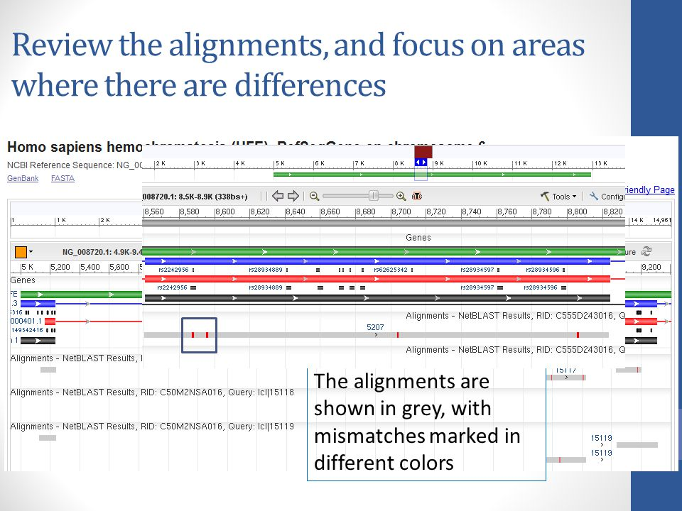 Review the alignments, and focus on areas where there are differences