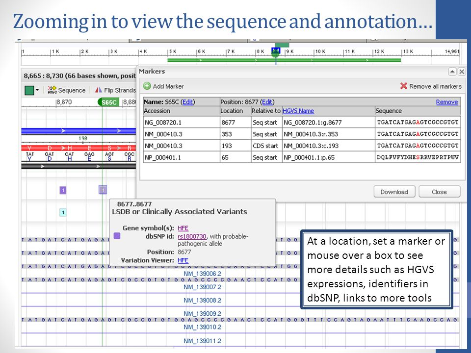 Zooming in to view the sequence and annotation…