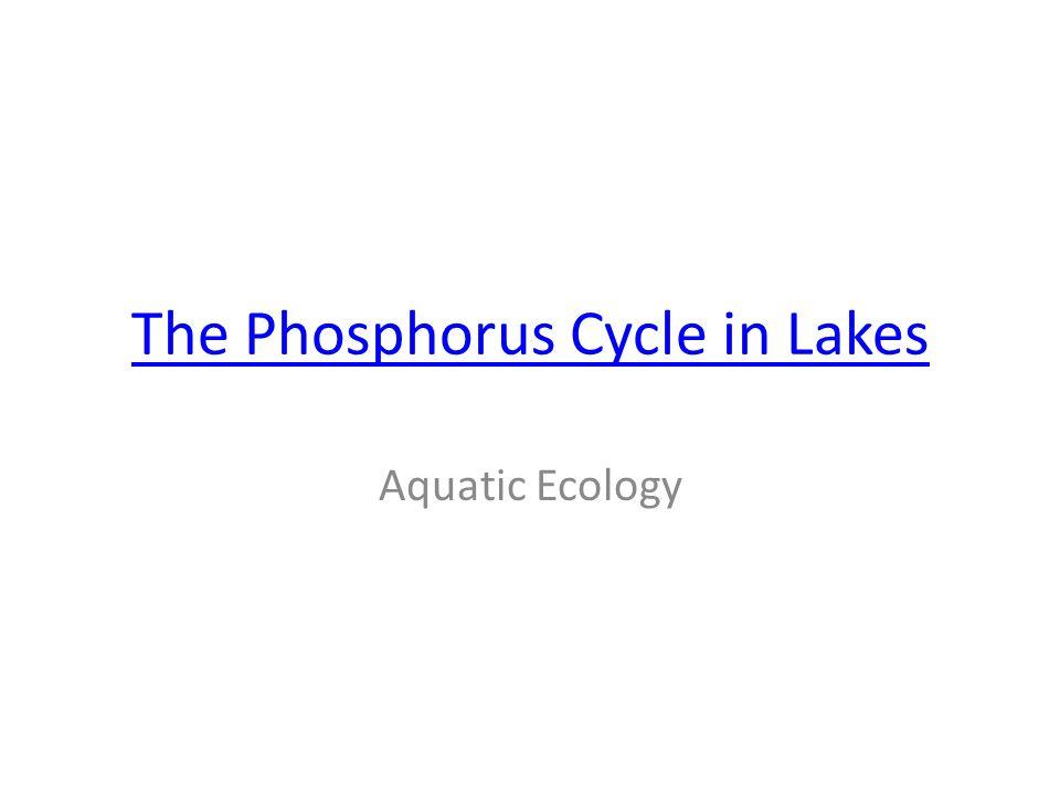 The Phosphorus Cycle in Lakes