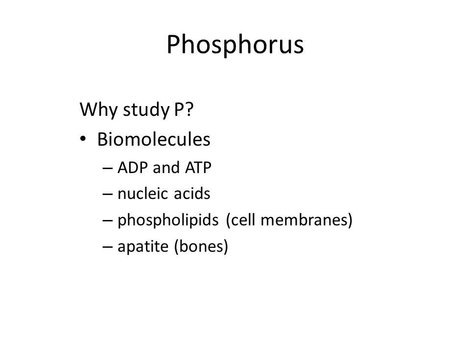 Phosphorus Why study P Biomolecules ADP and ATP nucleic acids