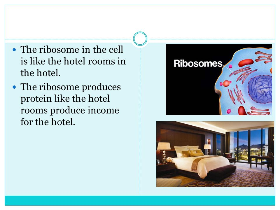 The ribosome in the cell is like the hotel rooms in the hotel.