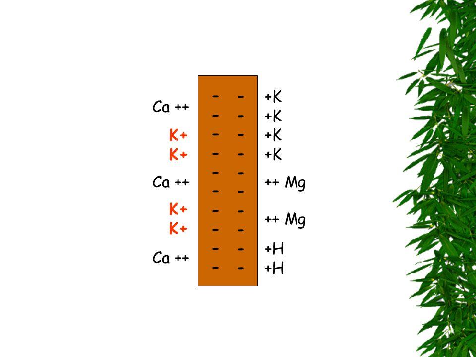 ---------- ---------- +K +K Ca ++ K+ K+ +K +K Ca ++ Ca ++ ++ Mg K+ K+ Ca ++ ++ Mg +H +H Ca ++