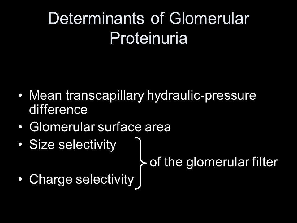 Determinants of Glomerular Proteinuria