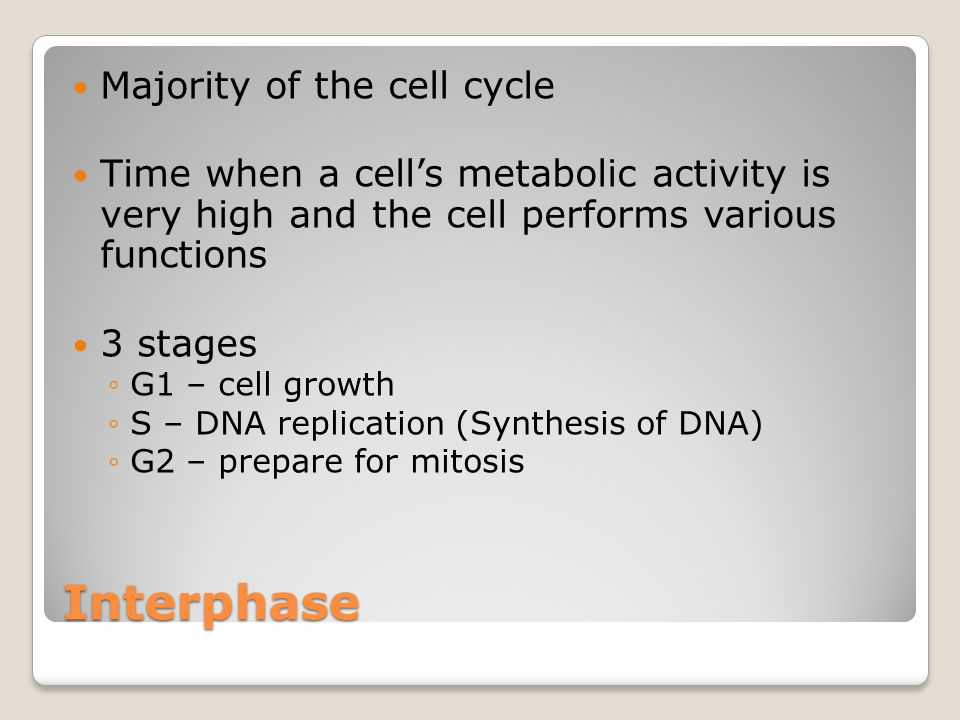 Interphase Majority of the cell cycle