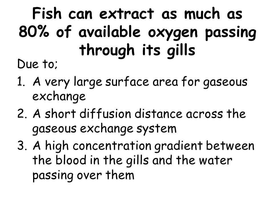 Fish can extract as much as 80% of available oxygen passing through its gills