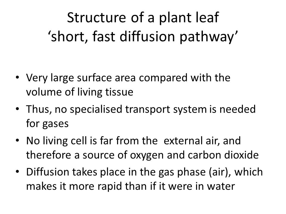 Structure of a plant leaf 'short, fast diffusion pathway'