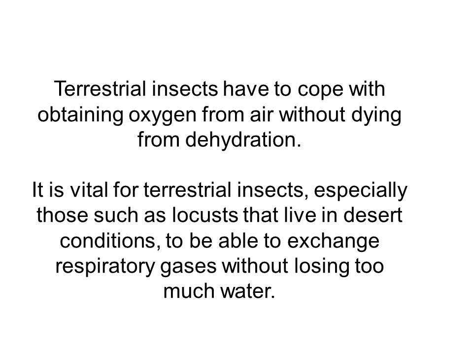 Terrestrial insects have to cope with obtaining oxygen from air without dying from dehydration.