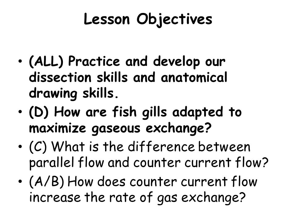Lesson Objectives (ALL) Practice and develop our dissection skills and anatomical drawing skills.