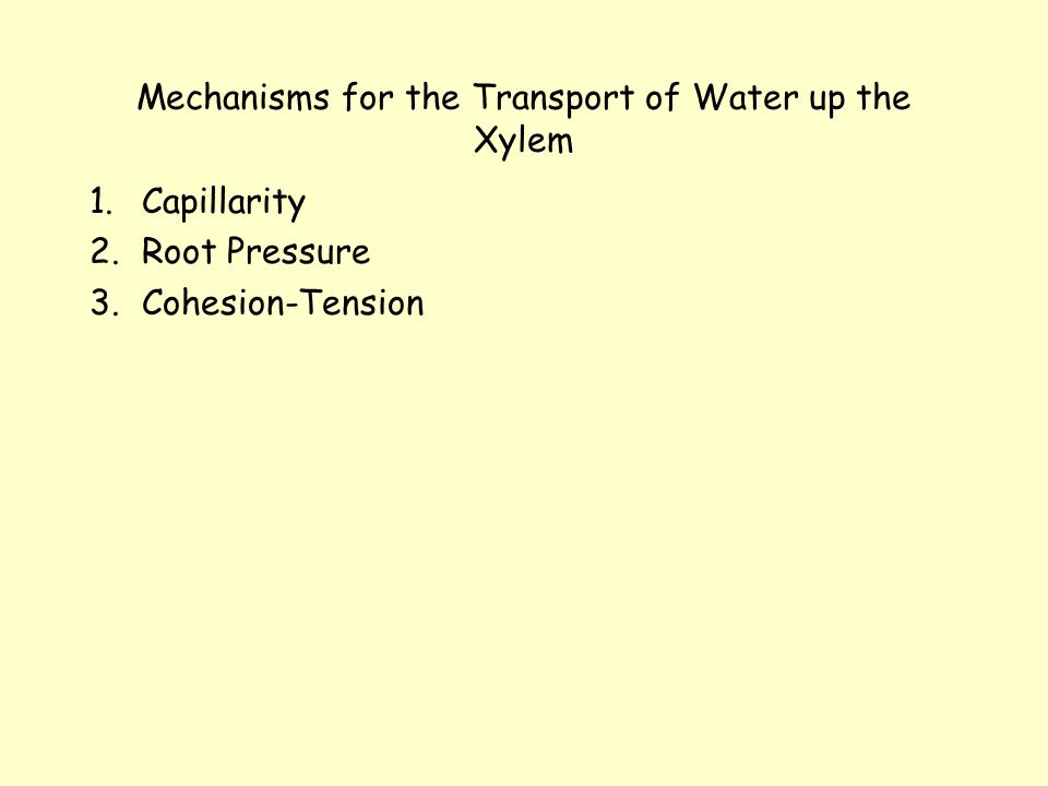 Mechanisms for the Transport of Water up the Xylem