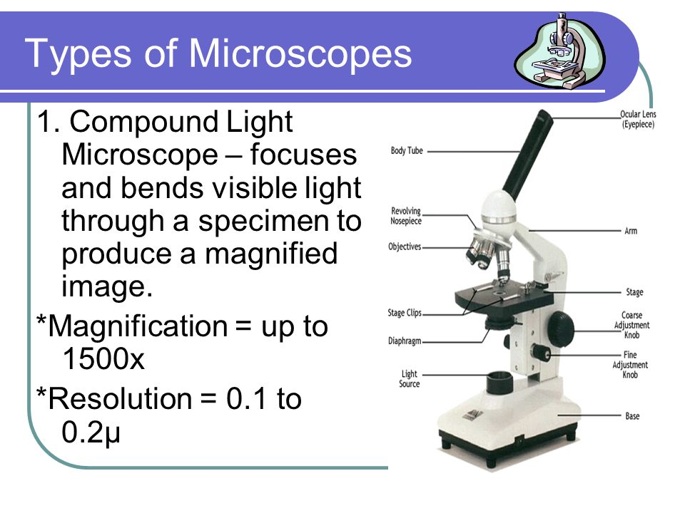 Types of Microscopes 1. Compound Light Microscope – focuses and bends visible light through a specimen to produce a magnified image.