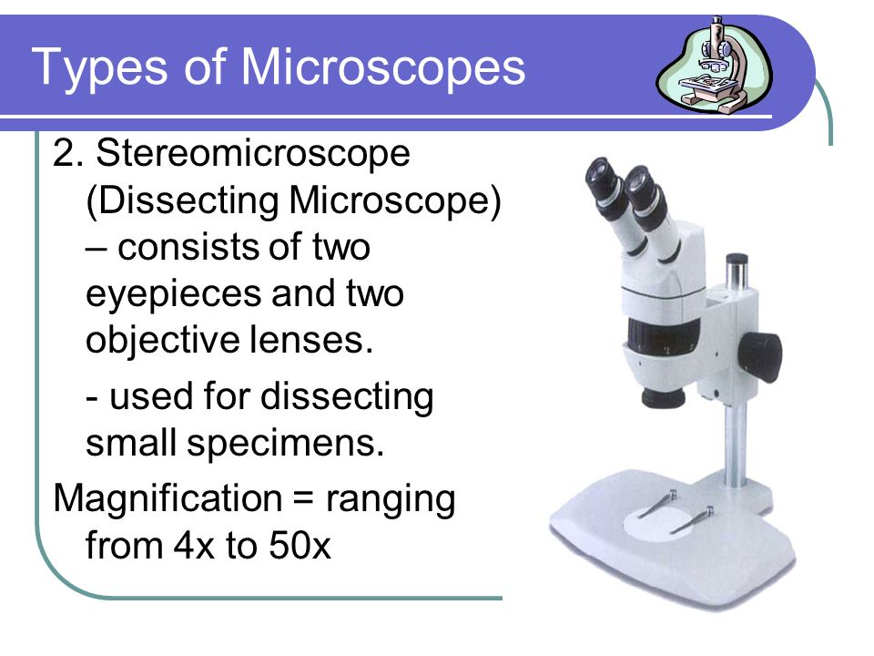 Types of Microscopes 2. Stereomicroscope (Dissecting Microscope) – consists of two eyepieces and two objective lenses.