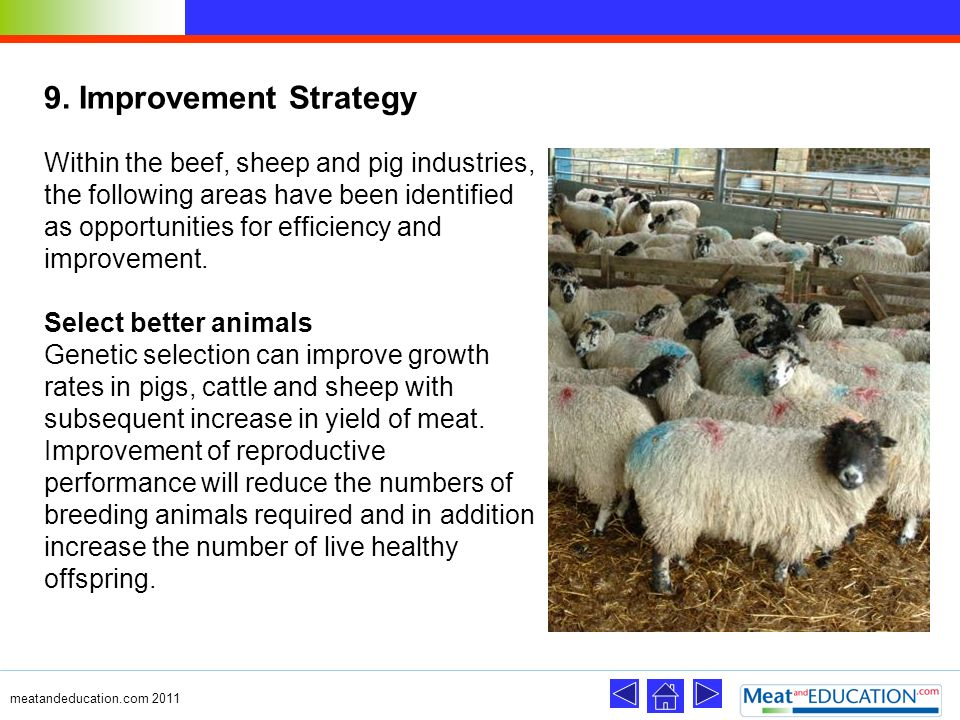 9. Improvement Strategy