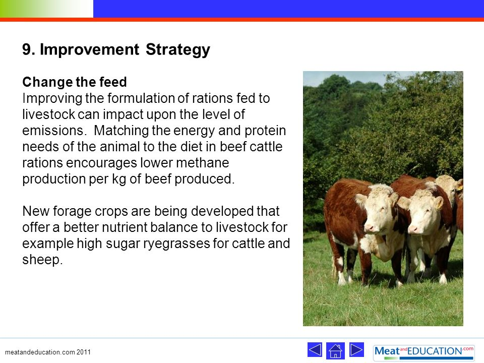 9. Improvement Strategy Change the feed